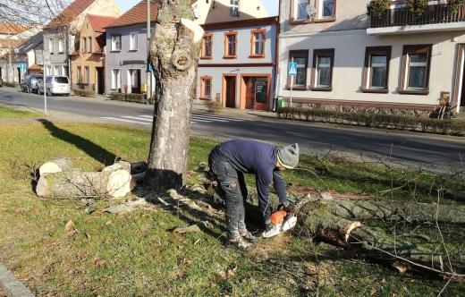 Wycinka drzewa