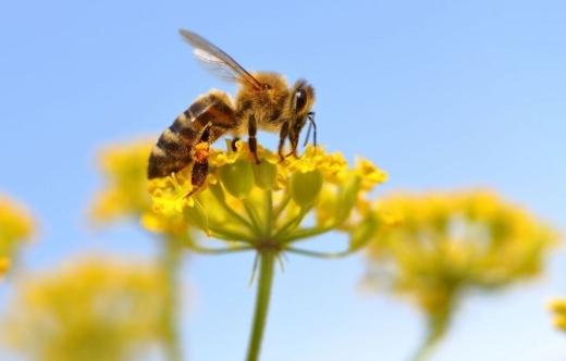 grafika przedstawia pszczołę na kwiatku