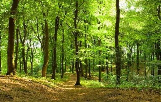 grafika przedstawia las